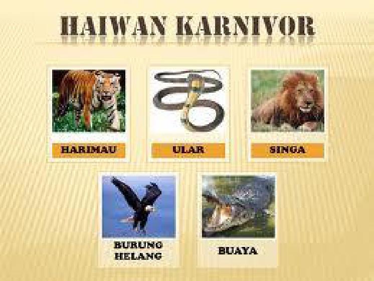 Gambar Haiwan Herbivor Karnivor Omnivor