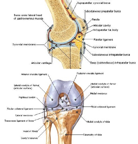 sinovita seroasă a tratamentului articulației genunchiului artrita reactiva protocol